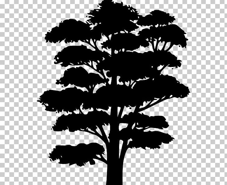 Tree Silhouette Drawing Png Clipart Black And White Branch