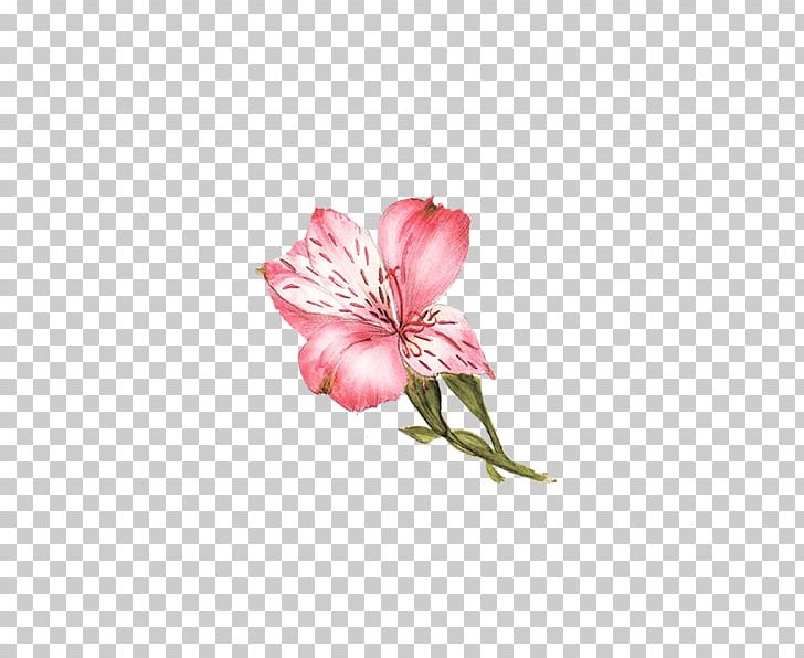 Flower Lilium PNG, Clipart, Adobe Illustrator, Alstroemeriaceae, Artworks, Cut Flowers, Download Free PNG Download