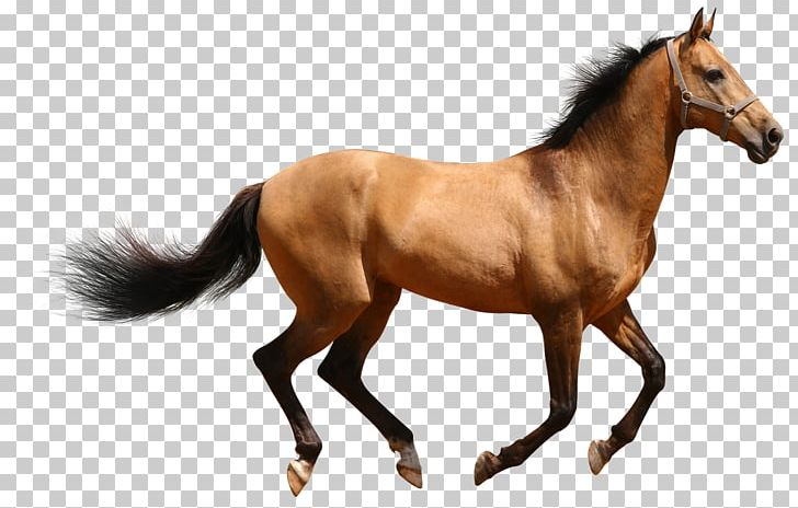 Horse Desktop PNG, Clipart, 3d Animal, Animal Figure, Bit, Bridle, Canter And Gallop Free PNG Download