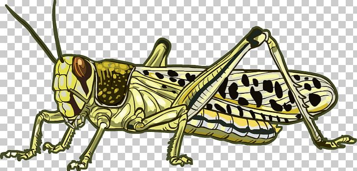 Desert Locust Grasshopper Beetle PNG, Clipart, Animal, Arthropod