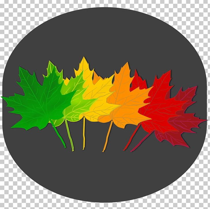 Maple Leaf Autumn Leaf Color Tree PNG, Clipart, Autumn Leaf Color, Autumn Leaves, Color, Computer Icons, Drawing Free PNG Download