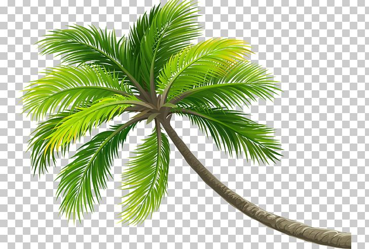 Coconut Tree Arecaceae Computer File PNG, Clipart, Arecaceae, Arecales, Christmas Tree, Coconut, Coconut Tree Free PNG Download