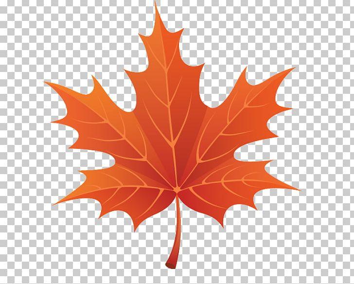 Autumn Leaf Color PNG, Clipart, Autumn, Autumn Leaf Color, Autumn Leaves, Download, Flowering Plant Free PNG Download