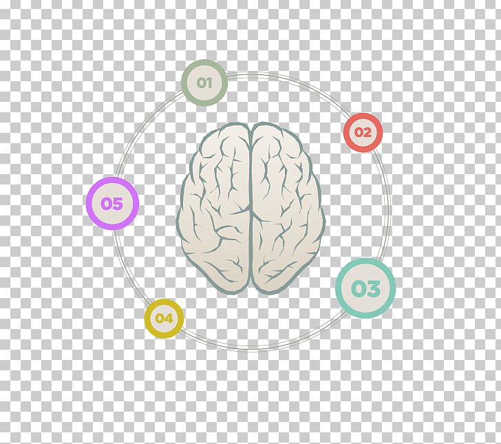 Human Brain Cerebrum PNG, Clipart, Agy, Analysis, Brain, Brain Thinking, Brain Vector Free PNG Download