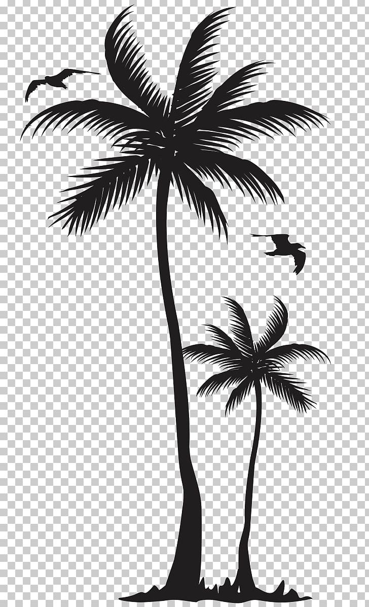 T Shirt Arecaceae Coconut Tree Clothing Png Clipart Arec Arecales