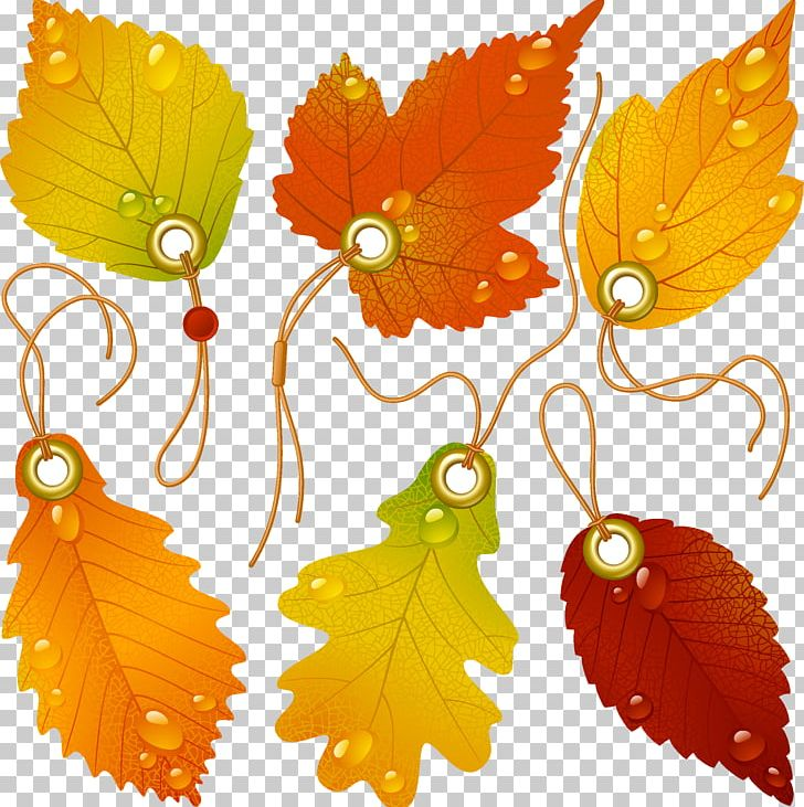 Japanese Maple Autumn Leaf Color PNG, Clipart, Camera Logo, Color, Encapsulated Postscript, Fall Leaves, Flower Free PNG Download