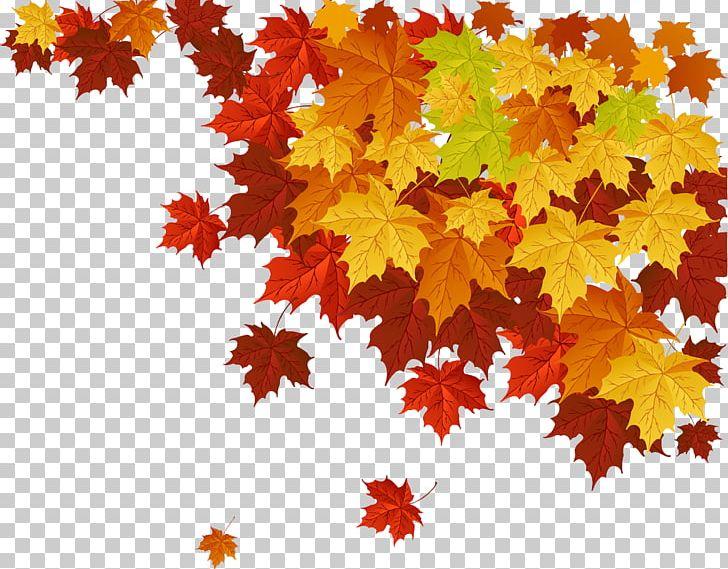 Autumn Leaf Color Maple Leaf PNG, Clipart, Autumn, Autumn Leaf Color, Autumn Leaves, Color, Deciduous Free PNG Download