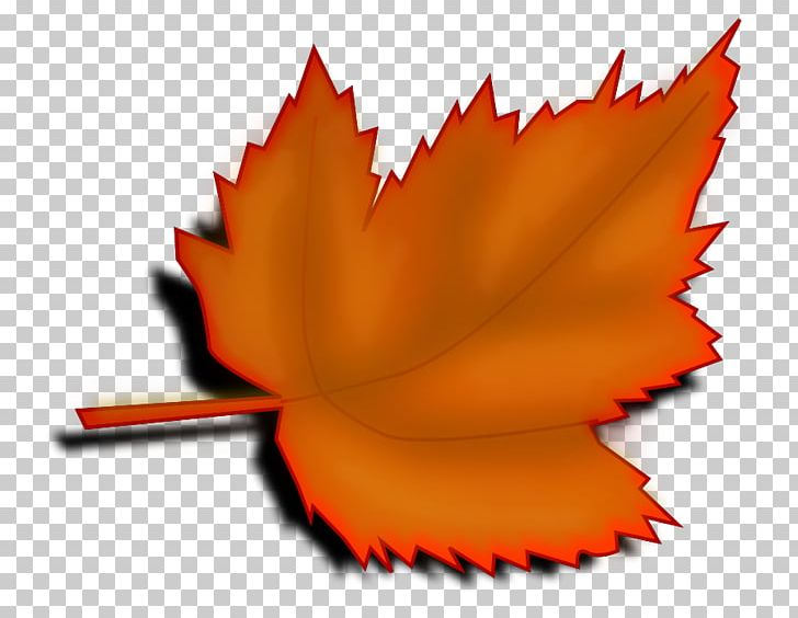 Red Maple Maple Leaf Autumn Leaf Color PNG, Clipart, Autumn, Autumn Leaf Color, Big Leaves Cliparts, Drawing, Flower Free PNG Download