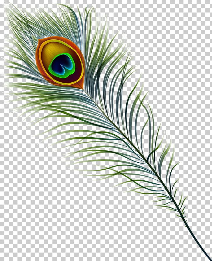 Peafowl Feather Stock Photography PNG, Clipart, Animal, Animals, Beak, Bird, Clip Art Free PNG Download