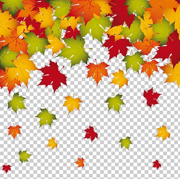 Autumn Leaf Color PNG, Clipart, Autumn, Autumn Leaf Color, Clipart, Clip Art, Decoration Free PNG Download