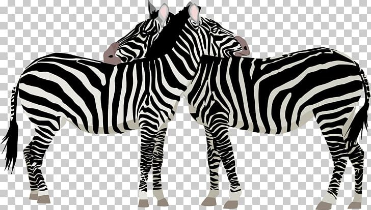 Baby Zebra Open PNG, Clipart, Animal Figure, Animals, Baby Zebra, Black And White, Cartoon Free PNG Download