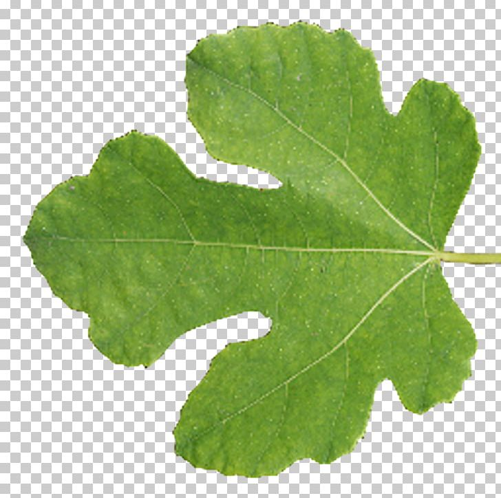 Leaf Tree Texture Mapping Blender PNG, Clipart, 3d Computer Graphics