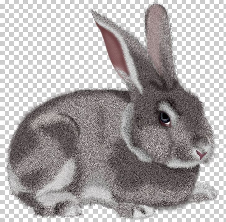 Rabbit Hare PNG, Clipart, Animals, Clipart, Clip Art, Cottontail Rabbit, Domestic Rabbit Free PNG Download