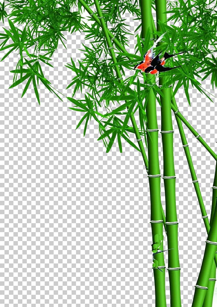 Lucky Bamboo Wall PNG, Clipart, Background Green, Bamboo
