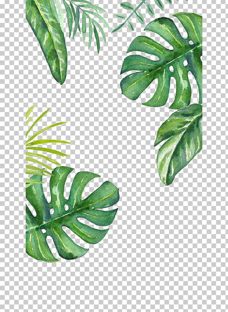 Banana Leaf PNG, Clipart, Banana Leaves, Cosmetics, Decorative, Decorative Background, Desktop Wallpaper Free PNG Download