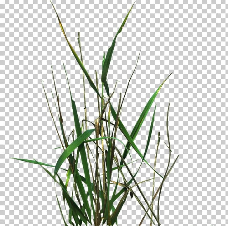 Lawngrass Texture Mapping PNG, Clipart, 2 D, 2d Computer Graphics