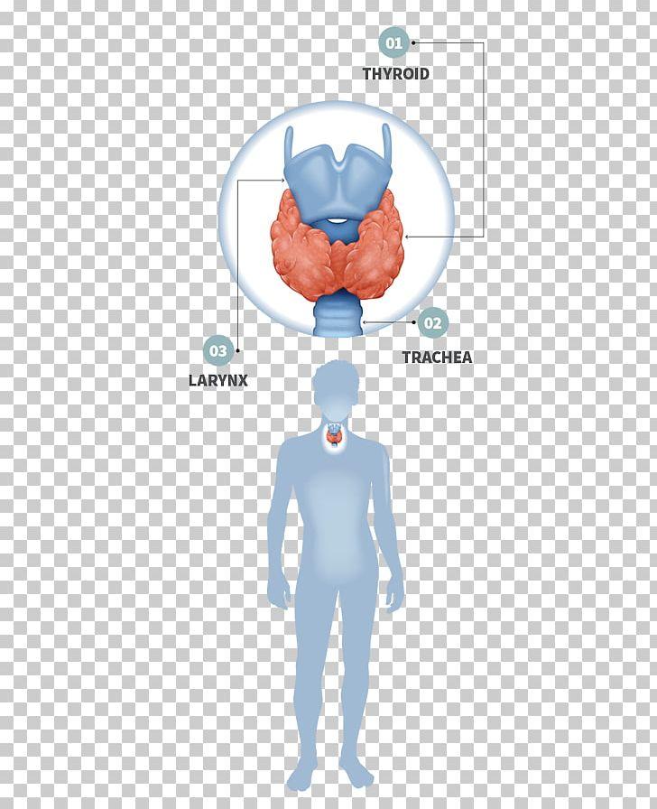 Thyroid Disease Gland Hypothyroidism Endocrine System Png Clipart