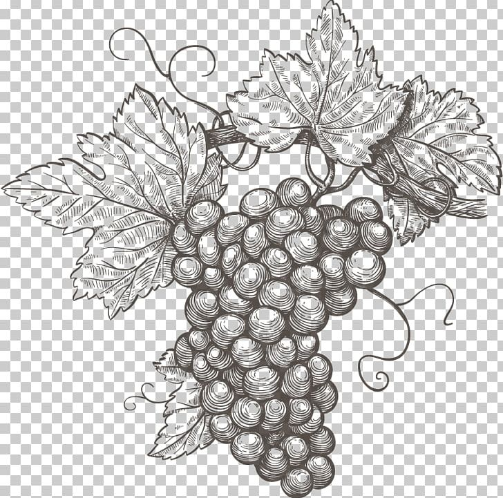 Common Grape Vine Wine Grape Leaves Png Clipart Black And White Drawing Etching Floral Design Flower