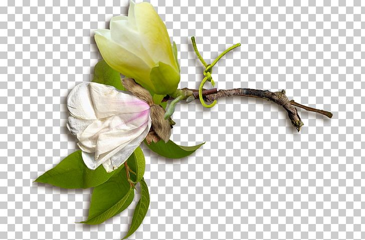 Rose Family Floral Design Cut Flowers Bud Plant Stem PNG, Clipart, Branch, Bud, Bud Plant, Cut Flowers, Floral Design Free PNG Download