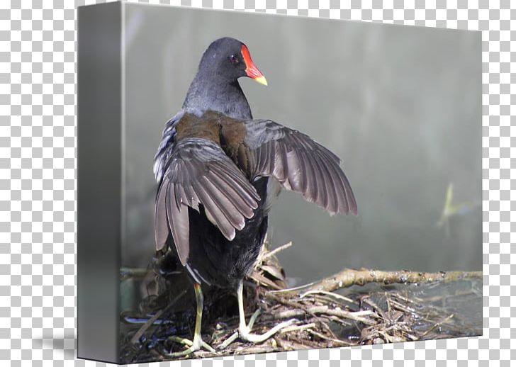 Beak Water Bird Feather PNG, Clipart, Animals, Beak, Bird, Fauna, Feather Free PNG Download