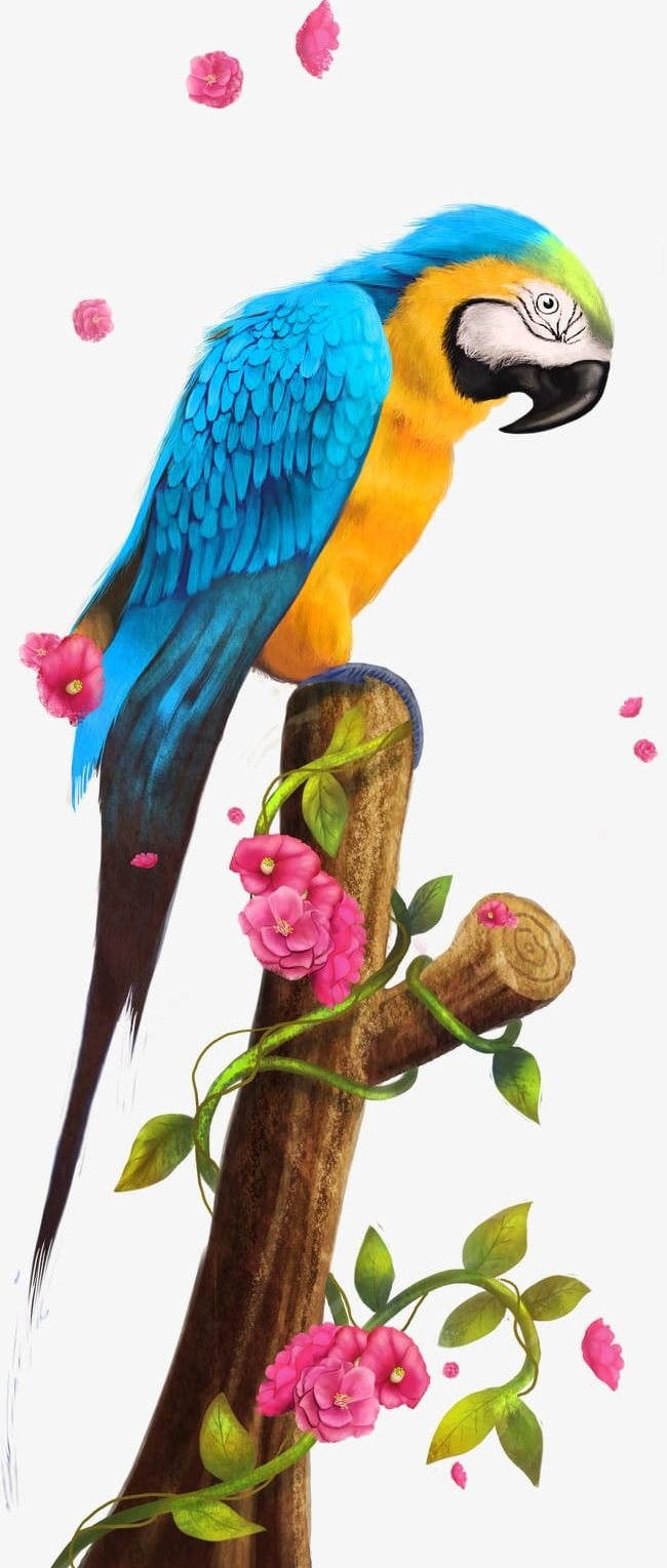 Parrot PNG, Clipart, Animal, Animals, Animal Wing, Bako, Bako Clipart Free PNG Download