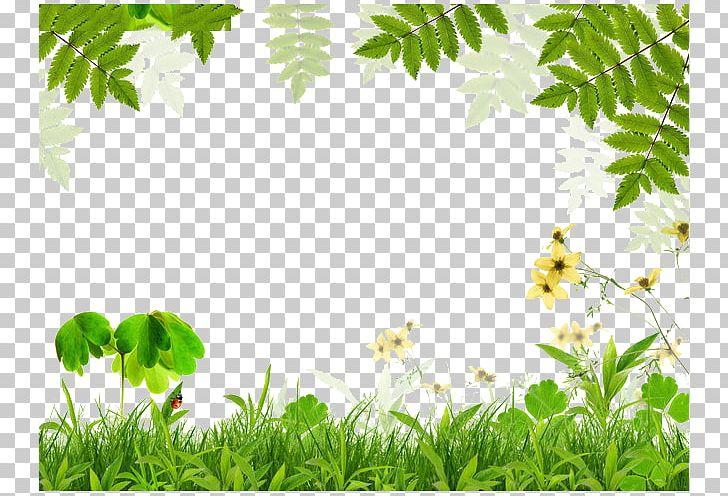 Spring Green Leaf Film Frame PNG, Clipart, Border, Border Frame, Branch, Certificate Border, Color Free PNG Download