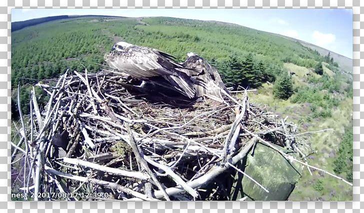 Bird Nest Bird Of Prey Fauna NEST+m PNG, Clipart, Animals, Beak, Bird, Bird Nest, Bird Of Prey Free PNG Download
