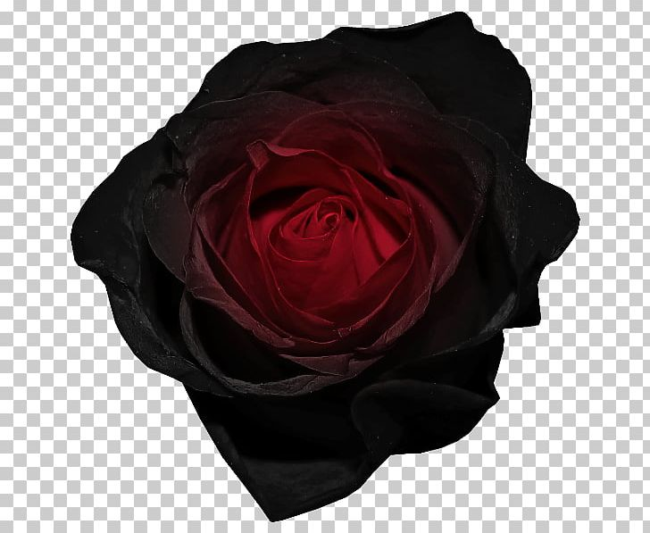 Black Rose Red PNG, Clipart, Animation, Black, Black Rose, Blog, Clip Art Free PNG Download