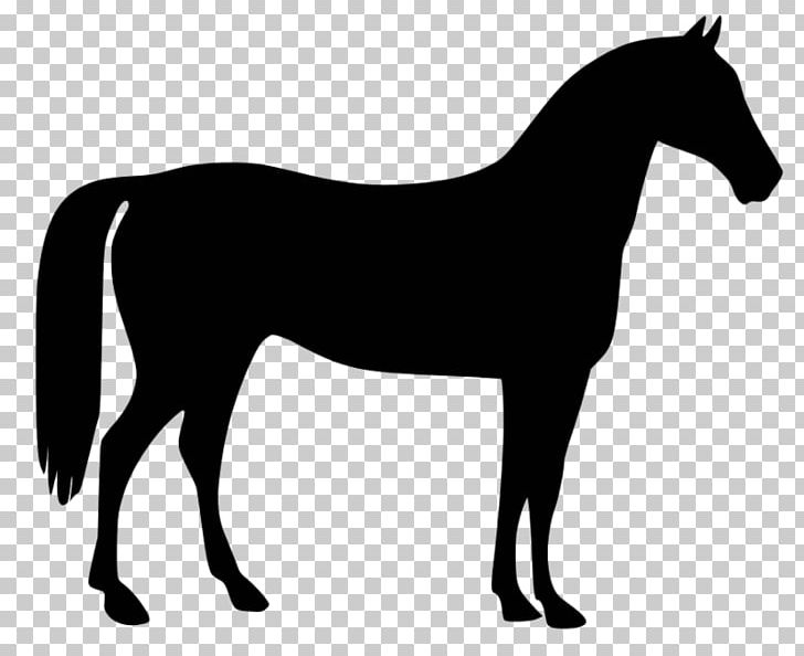 Horse standing. American quarter rearing png