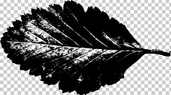 Autumn Leaf Color Silhouette PNG, Clipart, Autumn, Autumn Leaf Color, Black And White, Clip Art, Download Free PNG Download