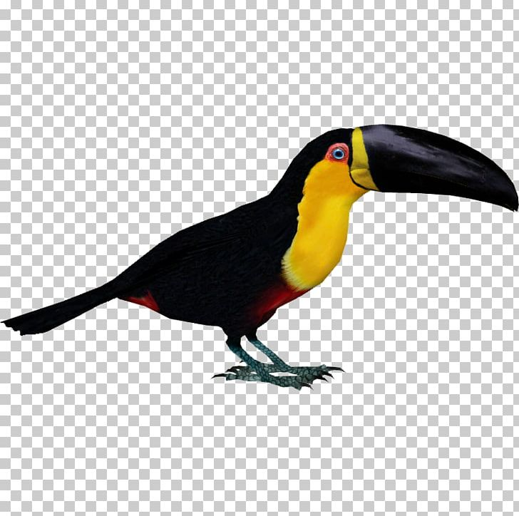 Zoo Tycoon 2 Bird Toucan Parrot Woodpecker PNG, Clipart, Animals, Beak, Bird, Channelbilled Toucan, Dinosaur Free PNG Download