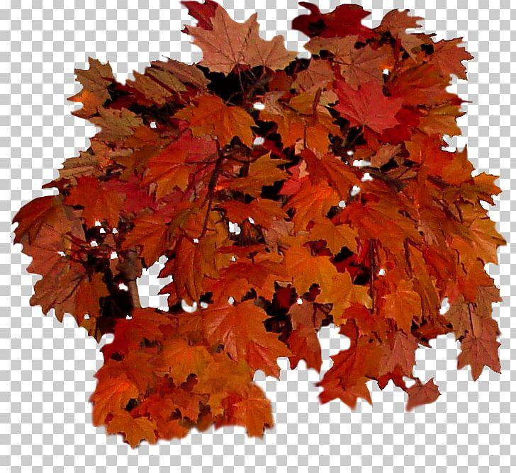 Autumn Leaf Color Autumn Leaf Color Tree PNG, Clipart, Autumn, Autumn Leaf Color, Autumn Leaves, Branch, Clip Art Free PNG Download