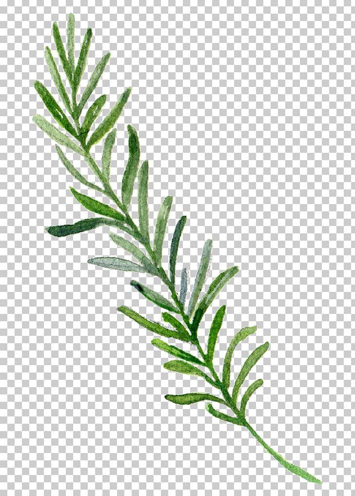 Watercolor Painting Border Leaf PNG, Clipart, Adobe Illustrator, Border, Border Frame, Borders, Branch Free PNG Download