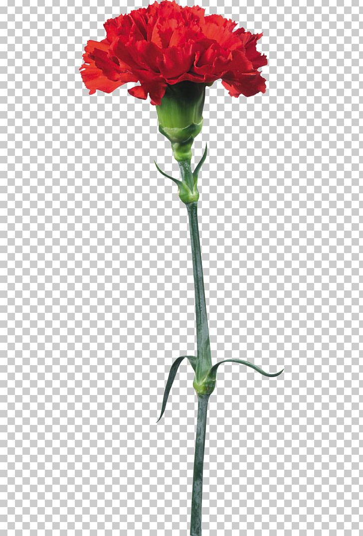 Portable Network Graphics Flower Psd Adobe Photoshop PNG