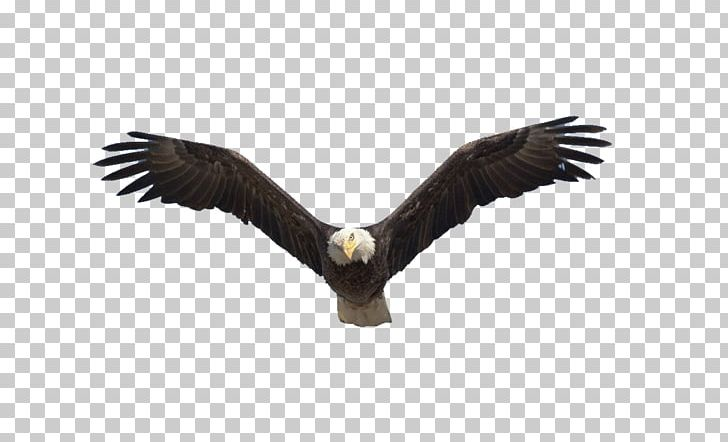 Benton Lake National Wildlife Refuge Bald Eagle Flight Bird PNG
