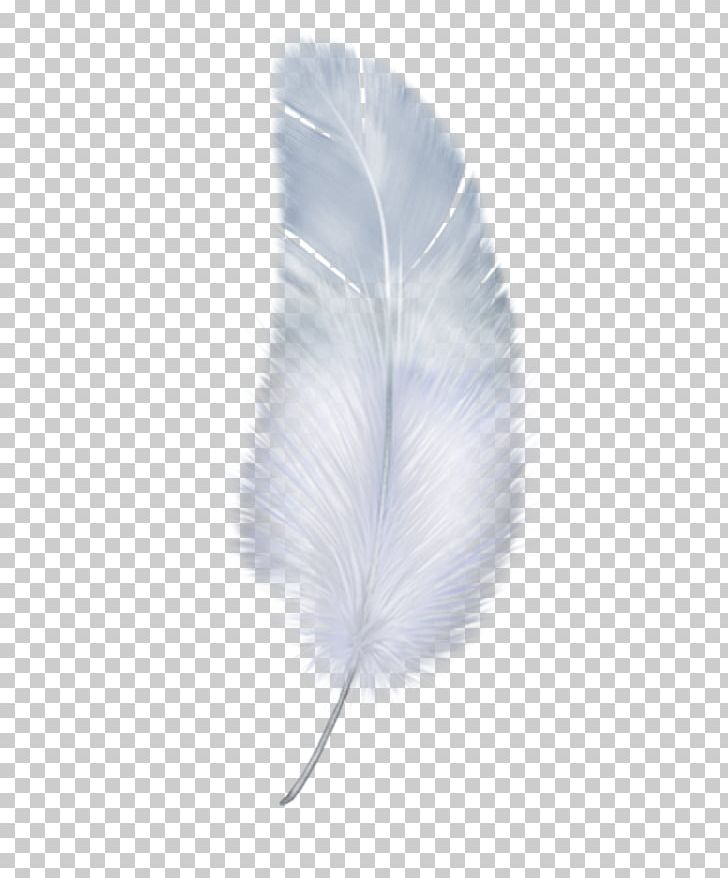 Feather Wing White PNG, Clipart, Aile, Animals, Background White, Black White, Download Free PNG Download