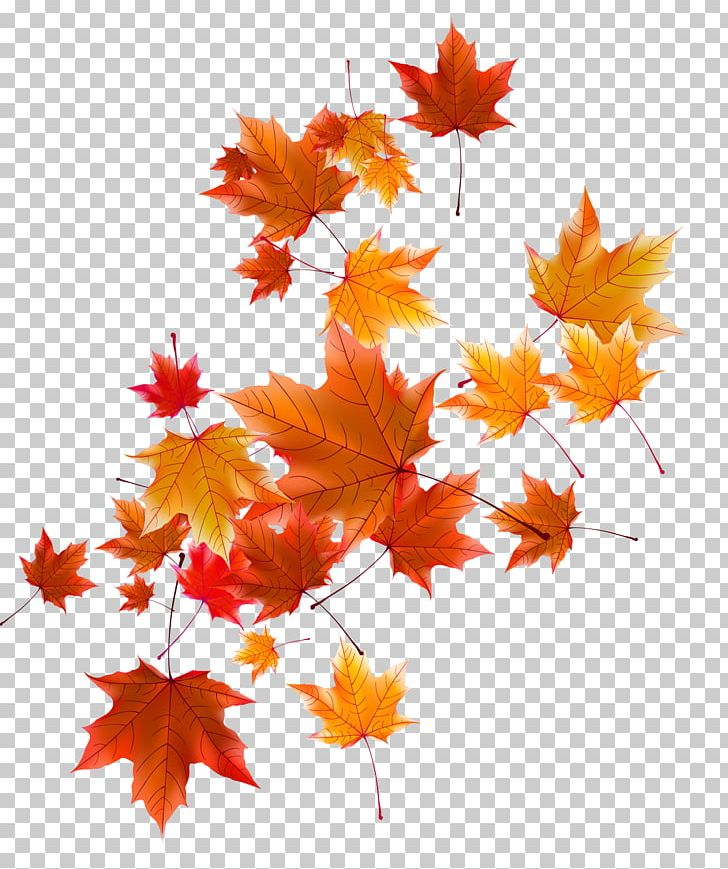 Autumn Leaf PNG, Clipart, Autumn, Autumn Leaf, Autumn Leaves, Coreldraw, Deciduous Free PNG Download