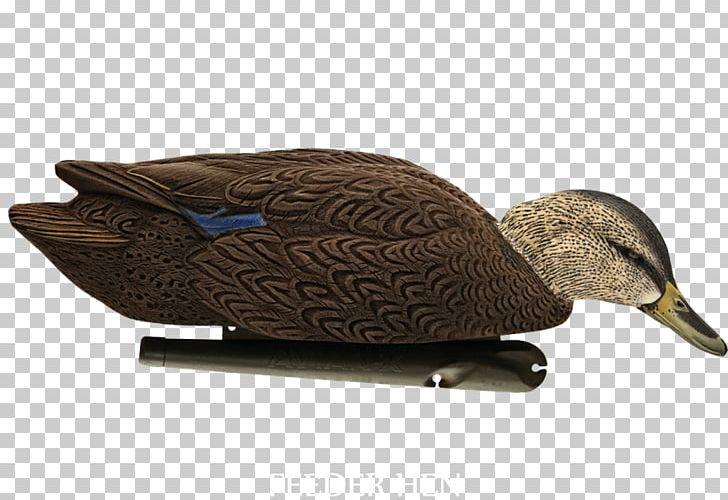 Mallard Duck Decoy American Black Duck PNG, Clipart,  Free PNG Download