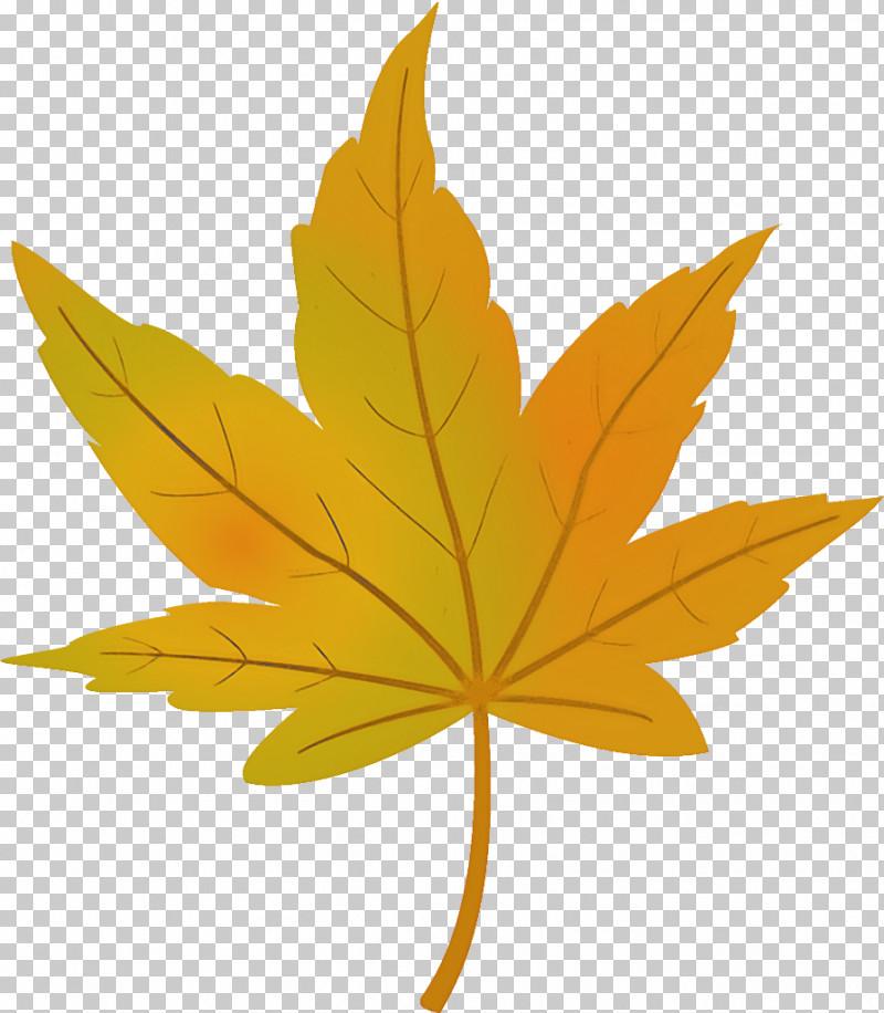 Maple Leaf Autumn Leaf Yellow Leaf PNG, Clipart, Autumn Leaf, Black Maple, Deciduous, Flower, Hemp Family Free PNG Download