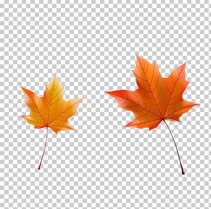 Maple Leaf Autumn PNG, Clipart, Autumn, Autumn Leaves, Christmas Decoration, Deciduous, Decorative Free PNG Download