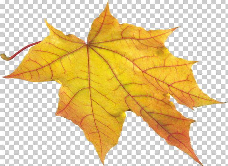 Autumn Leaf Color PNG, Clipart, Autumn, Autumn Leaf Color, Clip Art, Color, Computer Icons Free PNG Download
