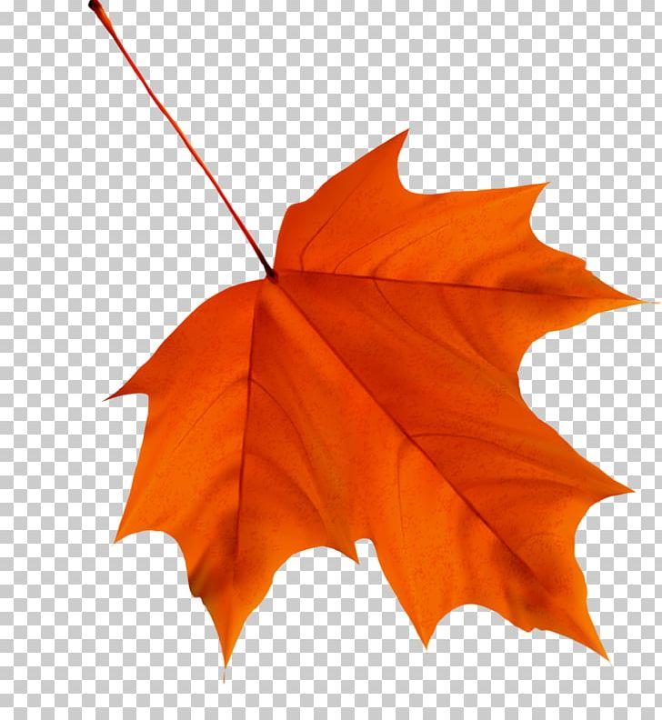 Maple Leaf Autumn Leaf Color Desktop PNG, Clipart, Autumn, Autumn Leaf Color, Desktop Wallpaper, Download, Encapsulated Postscript Free PNG Download