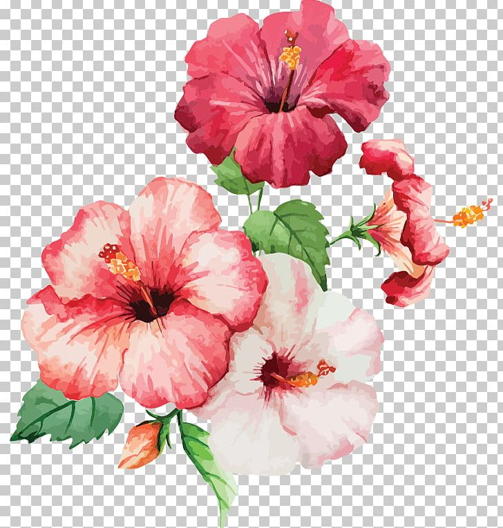 Watercolor: Flowers Watercolour Flowers Watercolor Painting Drawing PNG, Clipart, Annual Plant, Art, Botanical Illustration, China Rose, Chinese Hibiscus Free PNG Download