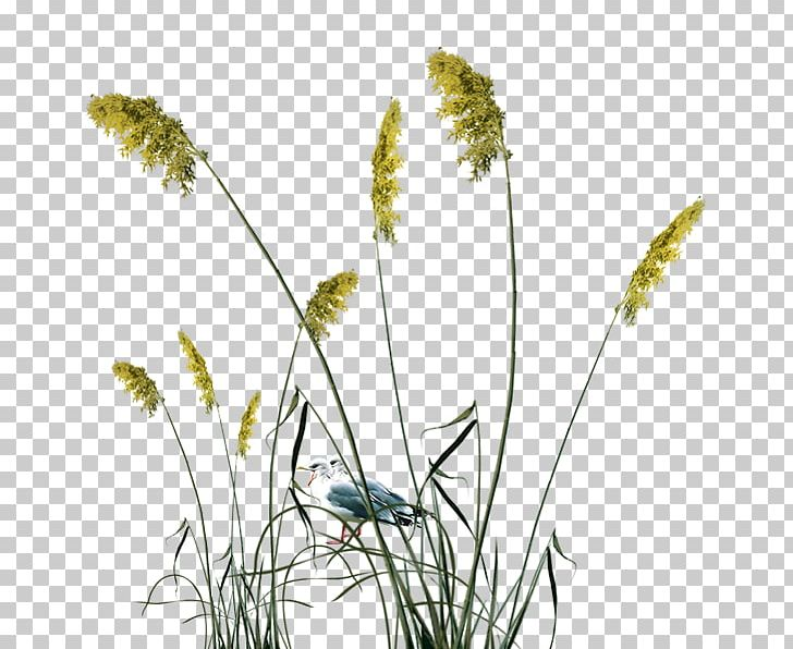 Reed Png Clipart Class Common Reed Computer Icons Computer Wallpaper Decorative Patterns Free Png Download