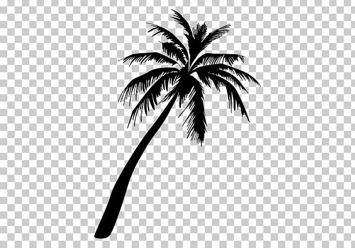 Arecaceae Png Clipart Animals Arecales Black And White Borassus
