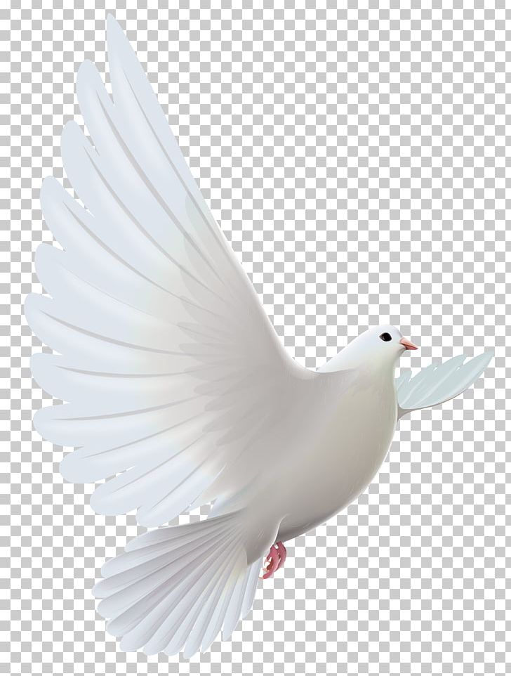 Pigeons And Doves Bird Prayer PNG, Clipart, Art White, Beak, Bird, Birds, Clipart Free PNG Download
