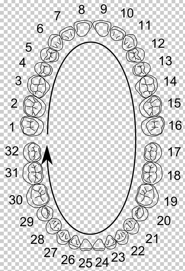 Universal Numbering System Human Tooth Deciduous Teeth Dental Anatomy PNG, Clipart, Area, Auto Part, Black And White, Chart, Circle Free PNG Download