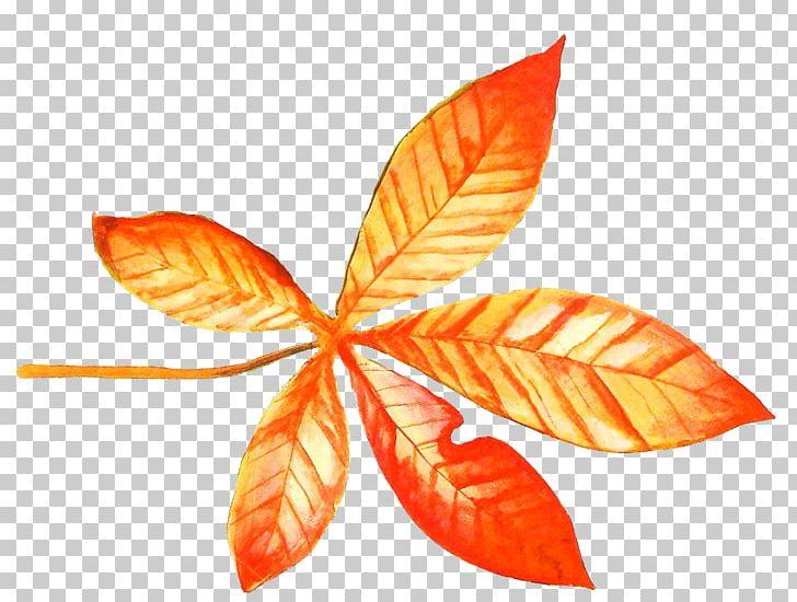 Maple Leaf Autumn PNG, Clipart, Adobe Illustrator, Autumn, Autumn Leaf, Blade, Encapsulated Postscript Free PNG Download