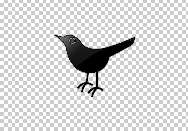Computer Icons Social Media Social Bookmarking PNG, Clipart, American Crow, Beak, Bird, Bird Icon, Bird Logo Free PNG Download