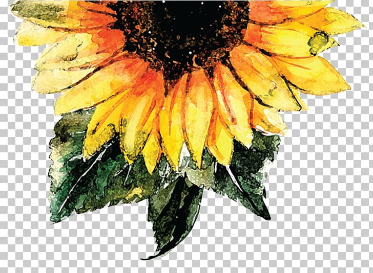 Common Sunflower Watercolor Painting Sunflower Seed Png Clipart Color Common Sunflower Daisy Family Flower Flowering Plant